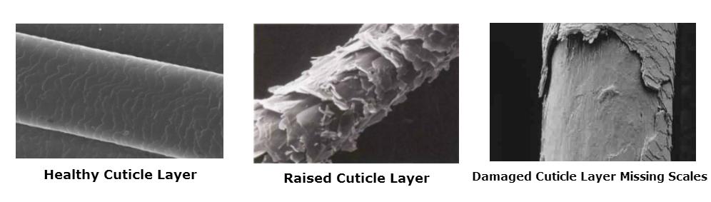 hair cuticle layer